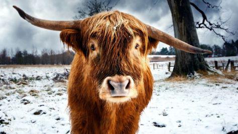 Micro Macro Winter Bull
